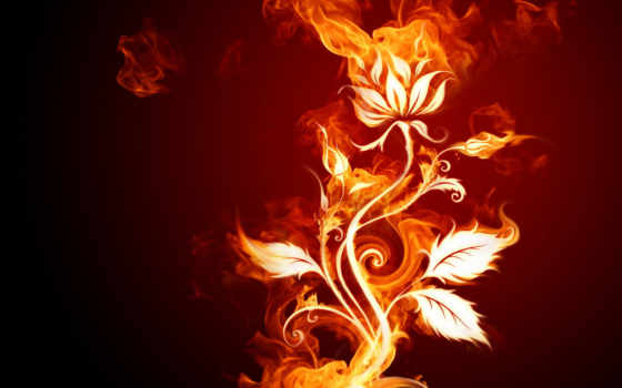 desktop, free, abstract, pictures, flowers, flower, fire,