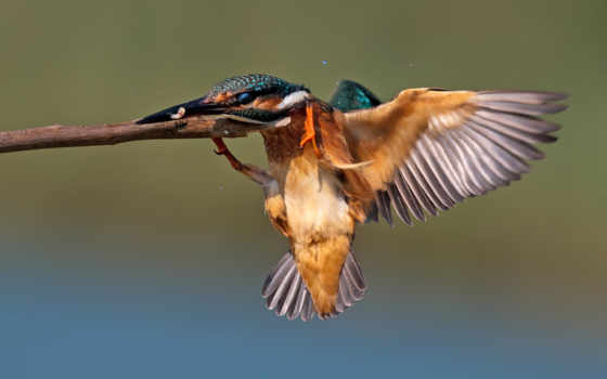 птица и ветка