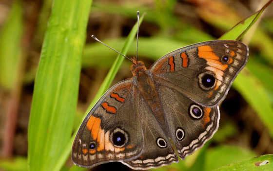 бабочки, красивые, июнь