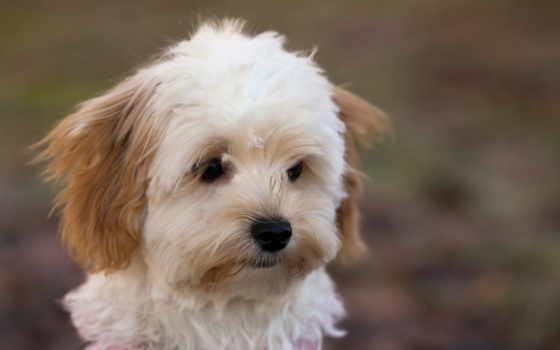 cute, собака, кб