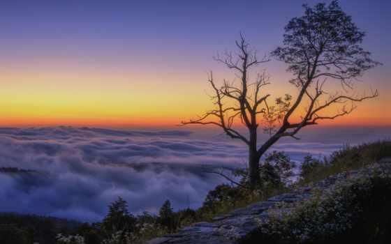 гора, clouds, утро, дерево, peak, природа, wide,