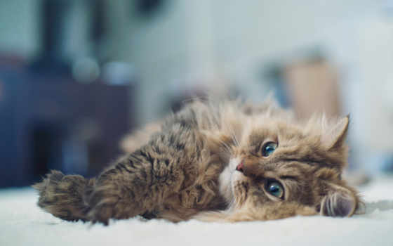 кошки, zhivotnye, кот, possible, широкоформатные, леопард,
