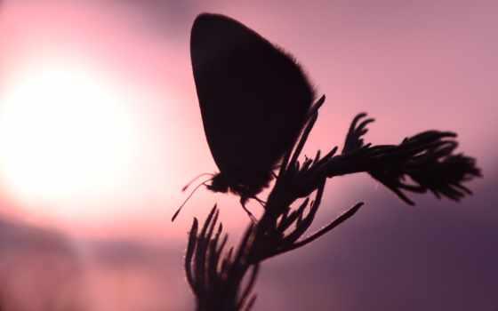 бабочка, минске, красоты,