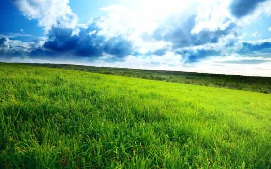 трава, поле, зелёный, зелёная, зеленое, сол, небо, густая, горизонт, пасмурный,