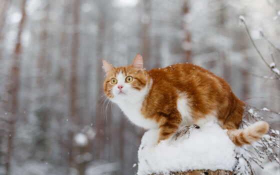 trend, animal, палуба, декабрь