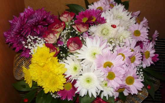 цветы, букеты, хризантемы Фон № 56680 разрешение 2048x1536