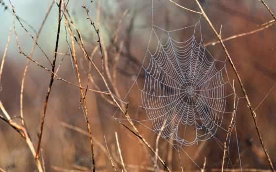 web, ветки, ветках
