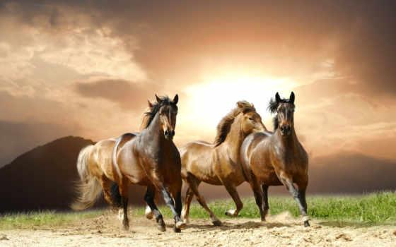 stock, cavalos, imagens, fotografias, royalty, free, fotos, cavalo, fotografia, correndo,