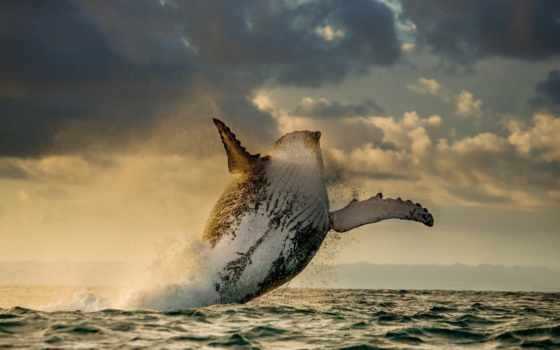 china, ocean, небе, прыжок, графика, водой, млекопитающие, world, underwater, небо,