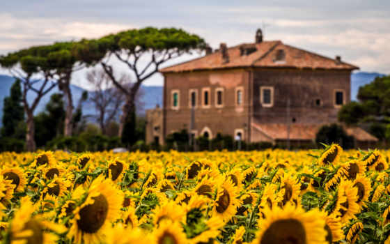 природа, sunflowers, поле, images, house, flowers, moving, картинка,