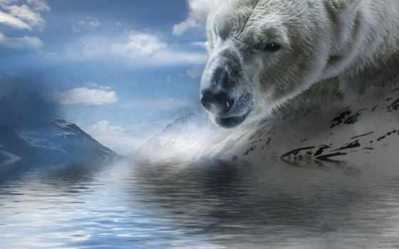 медведь, красивый, white, water, облако, гора