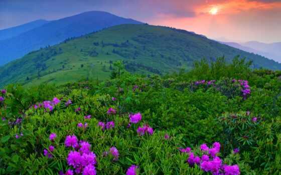 природа, cvety, гора, коллекция, закат, поле, color, фото