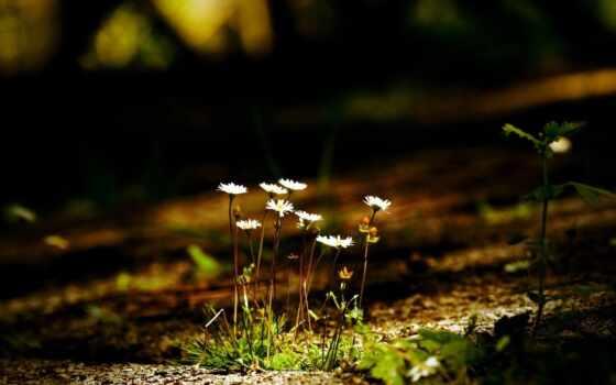 музыка, весна, flowers, весны, цветы, листья, макро,