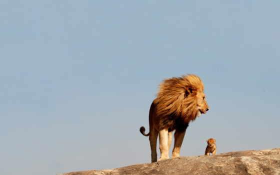 world, lion, real