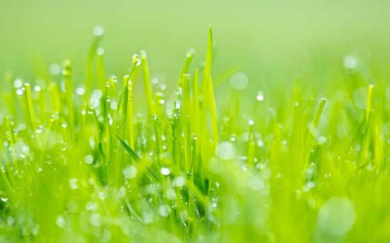 Зеленая трава в росе