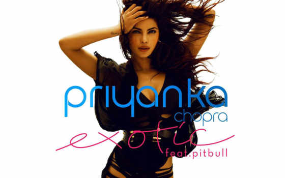 exotic, pitbull, priyanka
