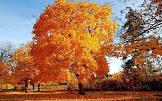 дерево, осеннее, осенние
