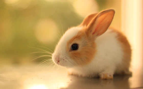 кролик, пушистый, уши, ус, взгляд, profile, года, month, зайчики, кролика,
