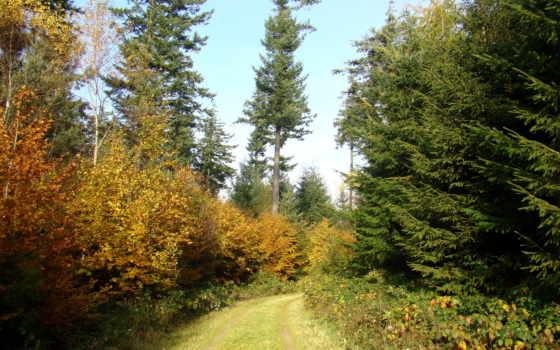 природы, пейзажи -, природа, лесные, красивые, украшения, новой, коллекции,