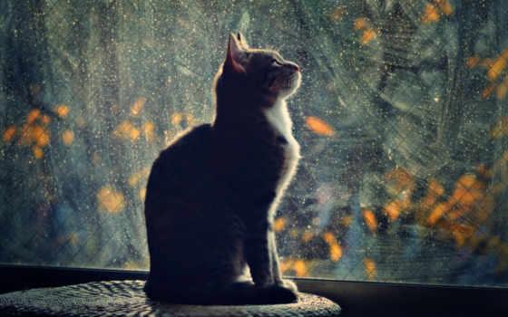 окно, смотрит, кот,