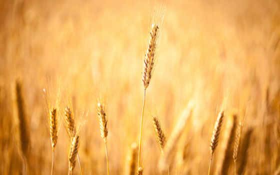 макро, trick, осень, margin, природа, растения,