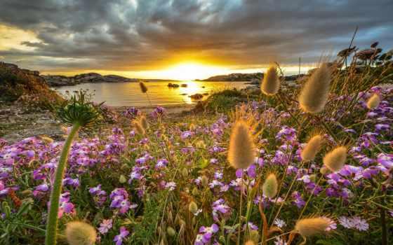 восход, закат, flowers, природа, desktop, сардиния, пляж, wildflowers,