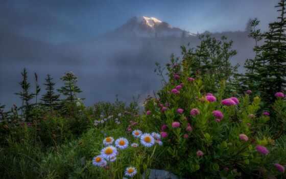 гора, цветы, цвета, поляна, туман, снег, природа, небо, озеро, хороший, дерево