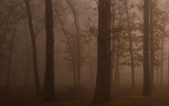 devushki, лесов, прилавок