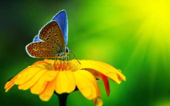 бабочка, цветы, красиво