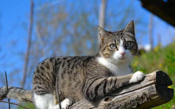 zhivotnye, природа, кот, кошки, кб, картинка, chat, спит, youtube,
