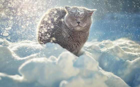 winter, снег, zhivotnye, кот,