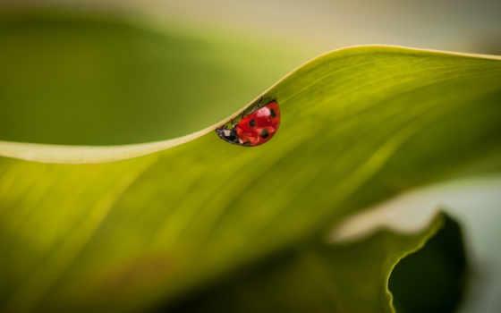 high, ladybug, desktop, насекомые, insects, widescreen, mobile, растение, wxga,