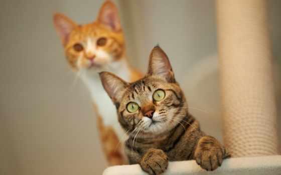 коты, прикольные, кот, загрузки, кошки, правой, кнопкой,