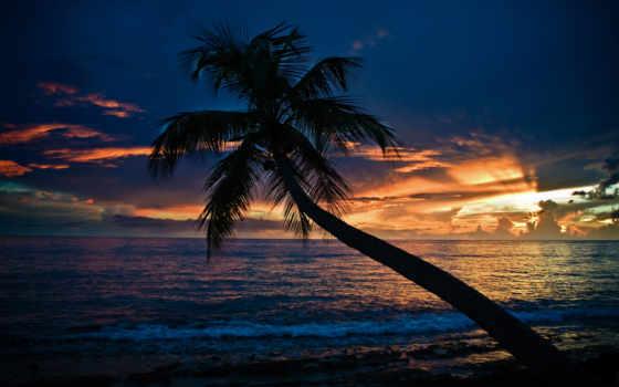 море, palm, пляж, закат