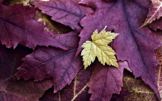природа, листья Фон № 24031 разрешение 1680x1050