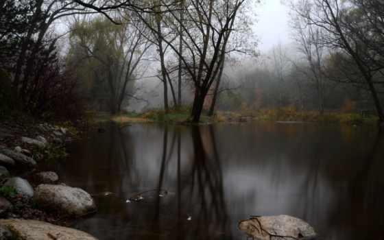 туман, лес Фон № 31584 разрешение 1920x1080