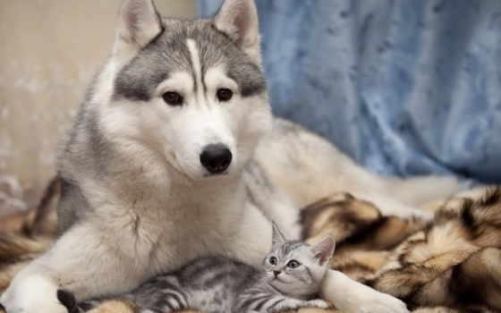 кот, дружба, собака
