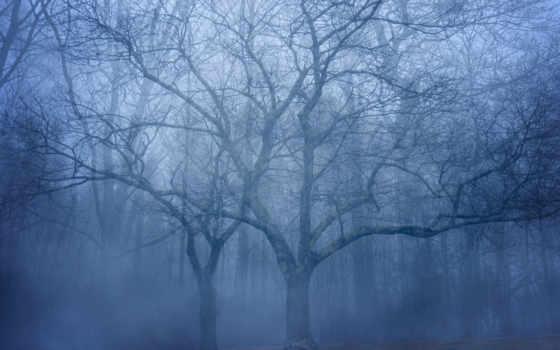 туман, trees, лес, природа, осень, листва, time, года,