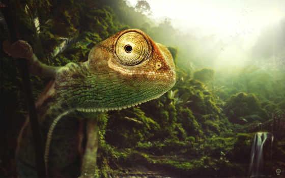 zhivotnye, chameleon, леса, рептилии, jungle, джунглей, картинка, фотографий,