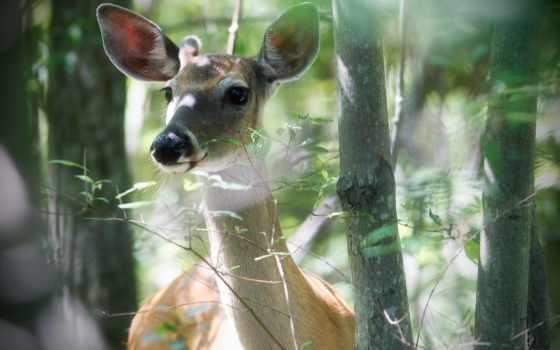 zhivotnye, fawn, природа, лань, лес, ветки, trees, doe, детёныш, растения,