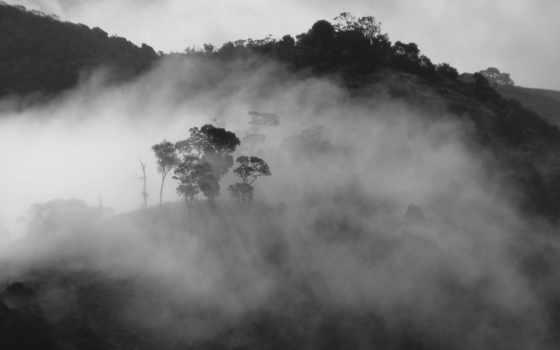 туман, лес Фон № 12364 разрешение 1920x1200