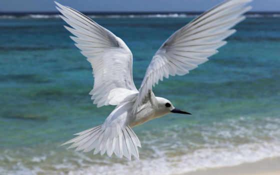 white, bird