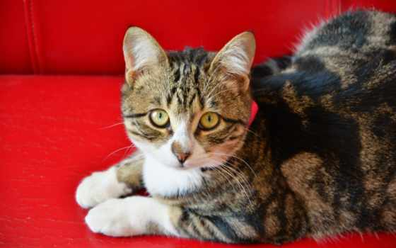 zhivotnye, кошка, категории