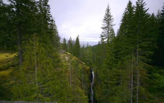 les, горы, речка, деревя, горный, priroda,
