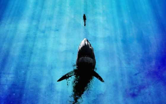 акула, мужчина, девушка, water, sveta, mega, rays, blue, ocean, минимализм,