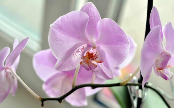 gentle, цветы, розовый