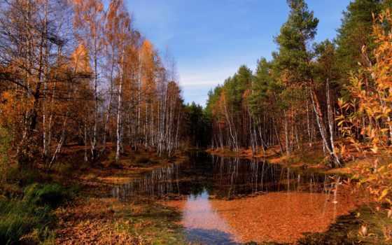осень, река, лес, природа, landscape, краски,