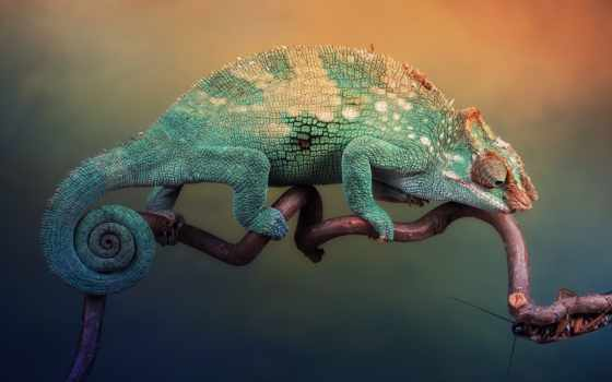 chameleon, высоком, ящер, branch,