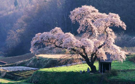 клозет, дерево