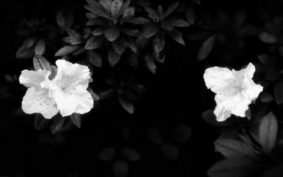 белое, чёрно, совершенно